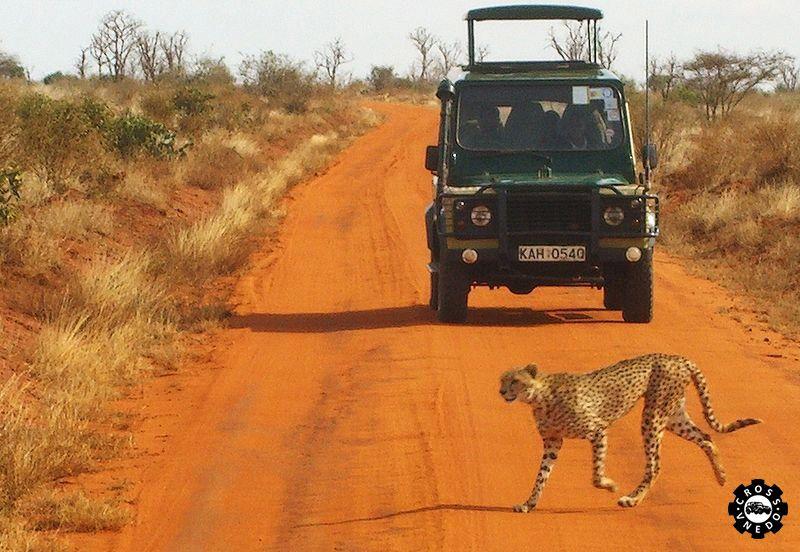 Сафари охота автомобиль фото